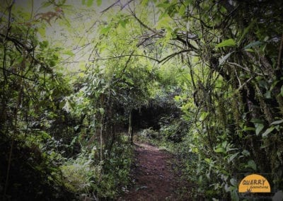 Trek through the forests of Coorg